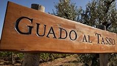 Antinori Guado Al Tasso